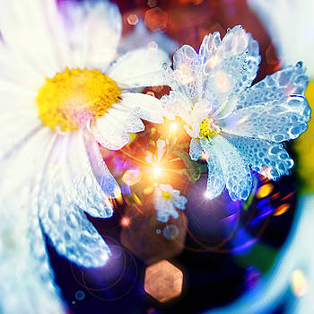 The world of dancing flowers by Mikko Tyllinen