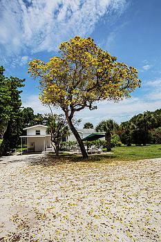 Scott Pellegrin - The Yellow Tree