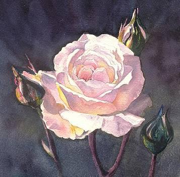 Thea's Rose by Sandra Phryce-Jones