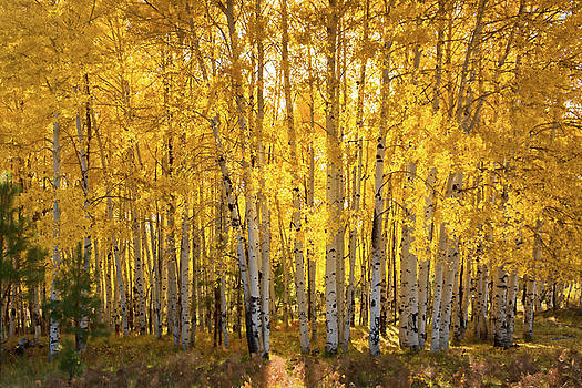 There's Gold In Them Woods  by Saija Lehtonen