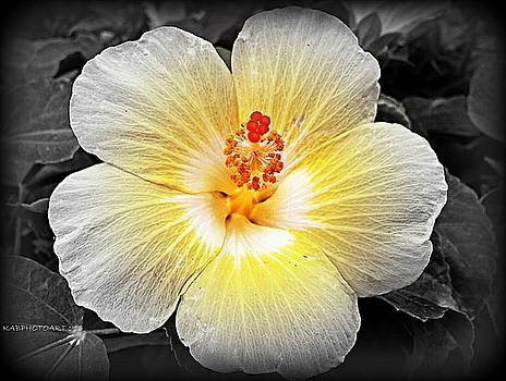 Things are Looking Up Hibiscus by Kathy Barney