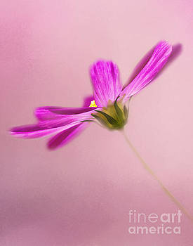 Think Pink by Pam  Holdsworth