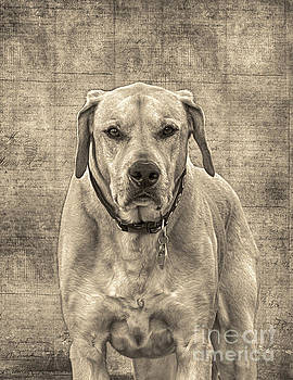 This Old Boy by Mim White