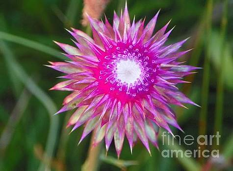 Thistle with Personality by Shirley Moravec