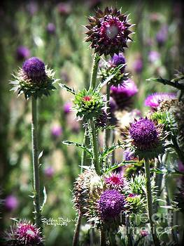 Thistles of Beauty by Bobbee Rickard
