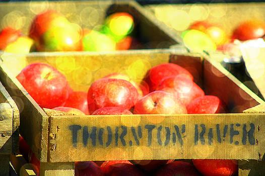 Thornton River Apples by Sheryl Bergman