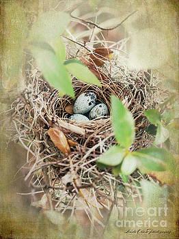 Three Bird Eggs by Linda Olsen