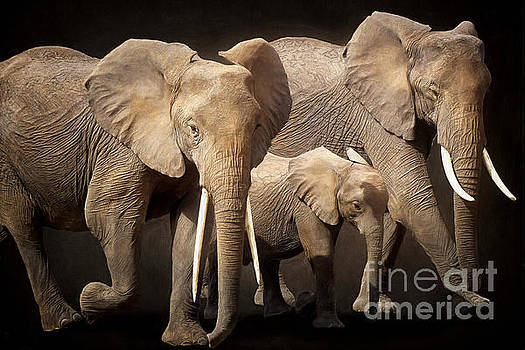 Three Elephants by Angela Doelling AD DESIGN Photo and PhotoArt
