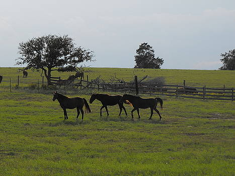 Three Horses by Rebecca Cearley