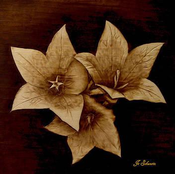 Three by Jo Schwartz