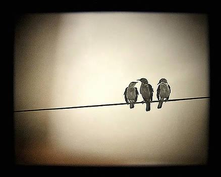 Three Little Birds by Trish Mistric