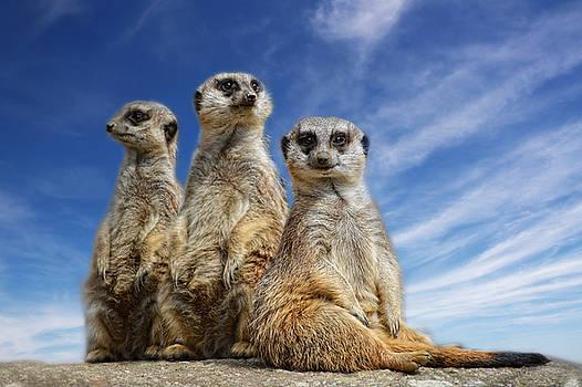 Three little sisters by Claudia Moeckel