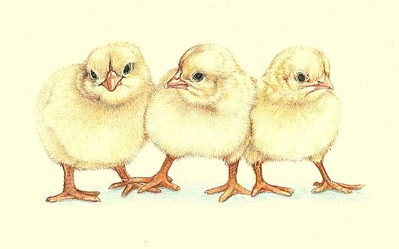Three Little Chickens by Emhi Artem