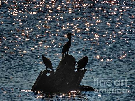 Three on a pier by Rrrose Pix