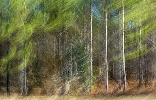 Three Pines by Gerald Grow
