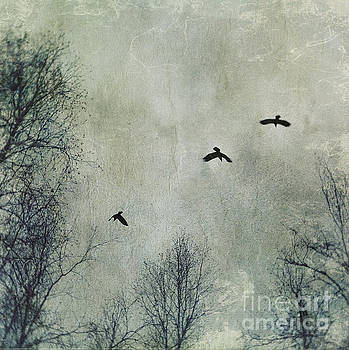 Three Ravens by Priska Wettstein