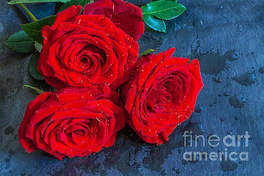 Randy Steele - Three Roses on Slate Still Life