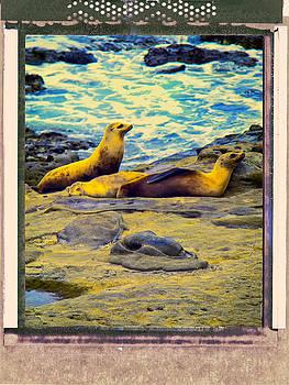 Dominic Piperata - Three Sea Lions