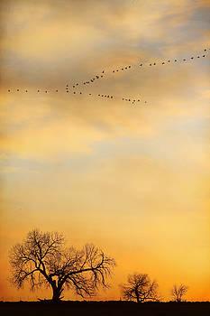 Three Trees Peace and Harmony Birds in V by James BO Insogna