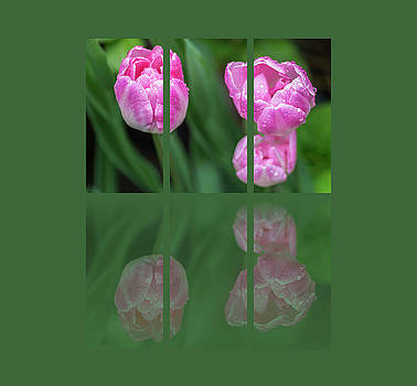 Three Tulip Triptych by Martina Fagan