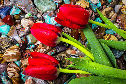 Three Tulips On Polished Stones by Garry Gay