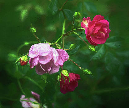 Three Wet Flowers in Oregon by Jeff Oates Photography