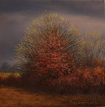 Three Winter Trees by Sean Conlon