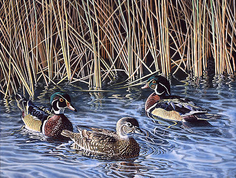 Three's A Crowd - Wood Ducks by Craig Carlson