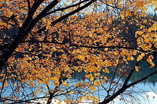 Larry Ricker - Through Autumn Leaves
