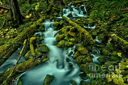 Through Moss Covered Boulders And Logs by Adam Jewell