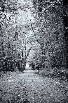 Through the Forest by Sue OConnor