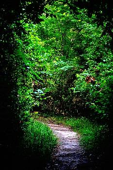 Through The Forest We Go by Tammy  Shiver