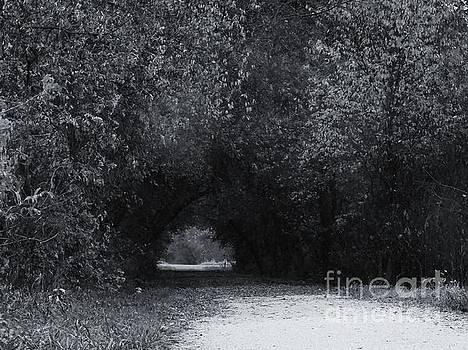 Through the Trees by J L Zarek
