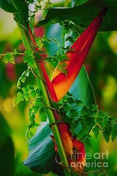 Through the Vines by Pamela Blizzard