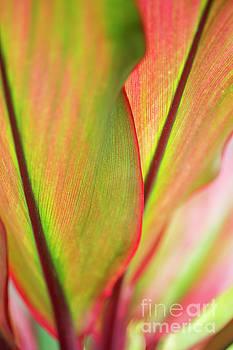 Charmian Vistaunet - Ti-Leaf Detail