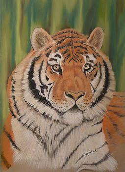 Tiger by Charles Hubbard