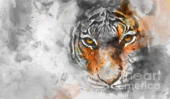 Tiger  by Chuck Styles
