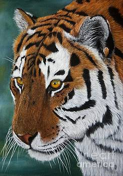 Tiger Closeup by Sid Ball