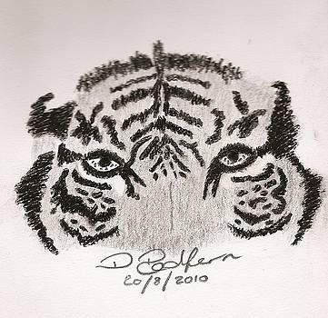 Tiger by Darryl Redfern