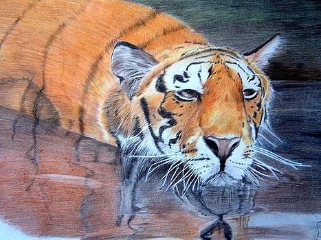 Tiger by Fabio Turini