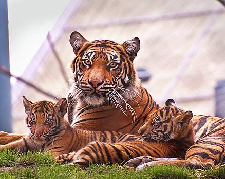 Jeanette Mahoney - Tiger Family