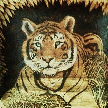 Tiger  by Freddy  Smith