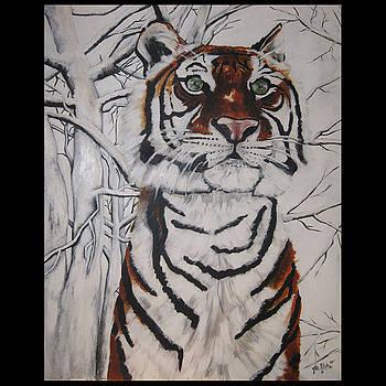 Tiger in the Snow by Jill Sluka