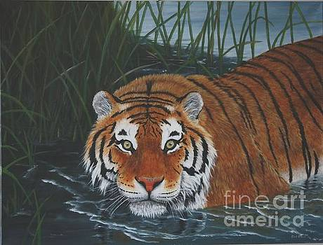 Tiger in Water by Sid Ball
