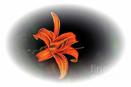 Tiger Lily by Arnie Goldstein