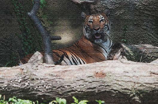 Tiger Resting by Deborah