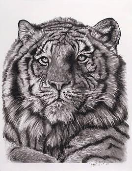 Tiger by Ryan L  Jones