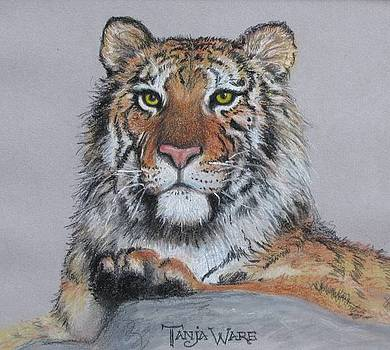 Tiger by Tanja Ware