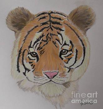 Tiger Tiger by Cynthia Adams