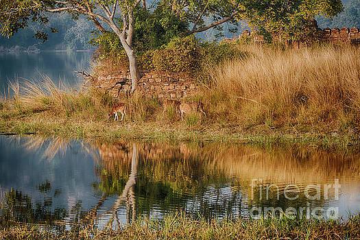 Tigerland by Pravine Chester